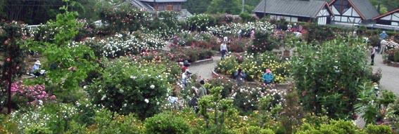 花の文化園2002/05/11:44kb