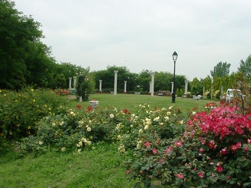 蜻蛉池公園薔薇