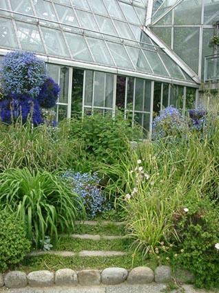 花の文化園2002年5月サルビア