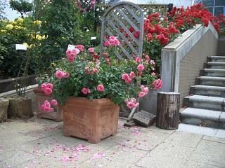 サンクンガーデン薔薇園