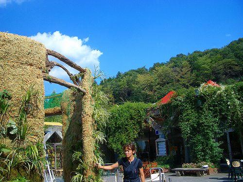 花の文化園で緑の壁づくり