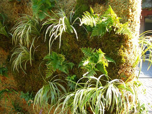 緑の壁に植えられているヤブラン