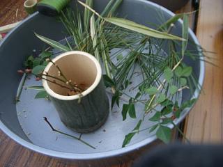 門松の植物