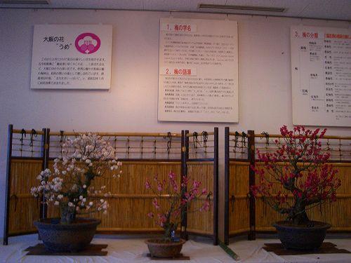 大阪府の花