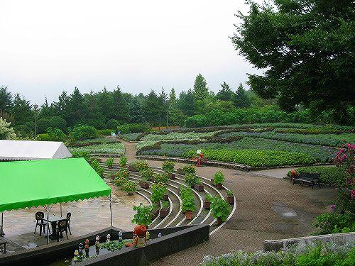 大花壇の風景2008年8月28日