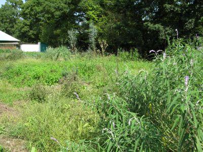 隣のハーブ畑