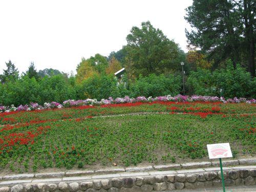 花の文化園の風景2008年11月3日