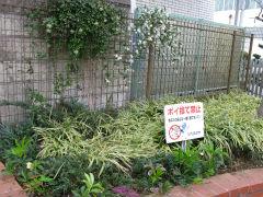 駅前交差点花壇